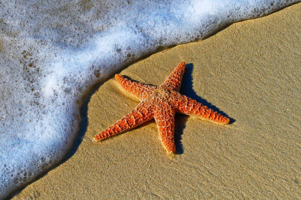 orangener Seestern am wasserüberspülten Strand