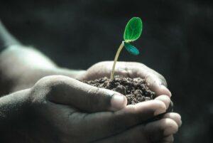 Keim in einer Hand voll Erde
