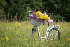 Fahrradtour der kfd zum Hof Renfert Deitermann